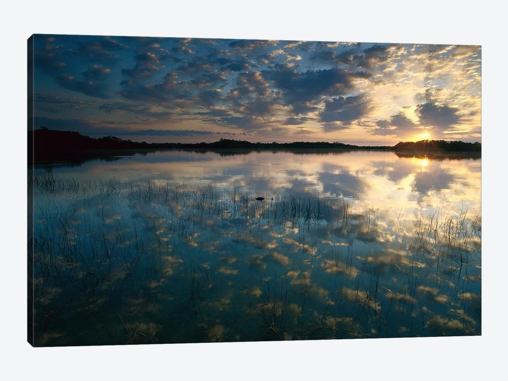 American Alligator In Nine-Mile Pond, Everglades National Park, Florida - Horizontal by Tim Fitzharris 1-piece Canvas Art Print