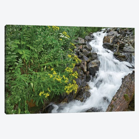 Creek Near Silverton, Colorado Canvas Print #TFI283} by Tim Fitzharris Canvas Art