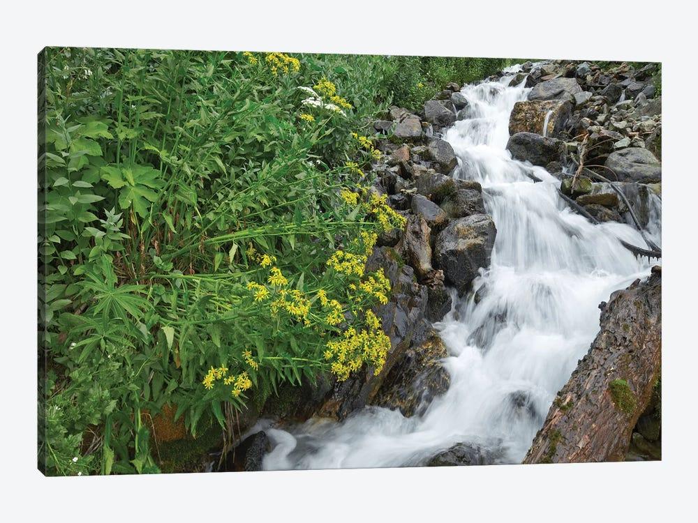 Creek Near Silverton, Colorado by Tim Fitzharris 1-piece Canvas Artwork