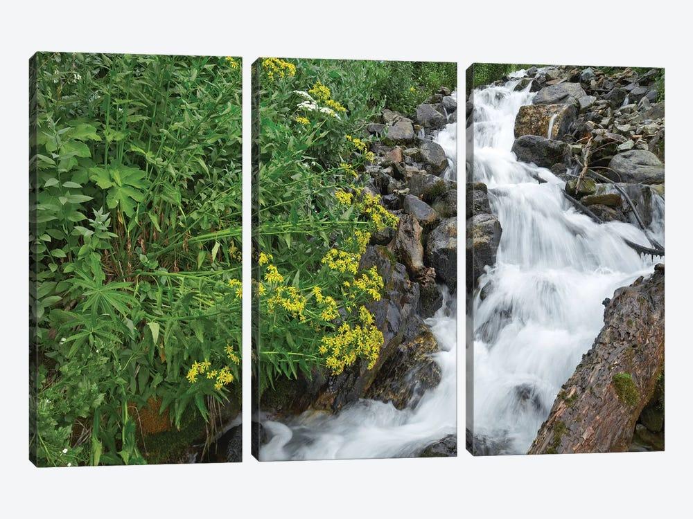 Creek Near Silverton, Colorado by Tim Fitzharris 3-piece Canvas Art