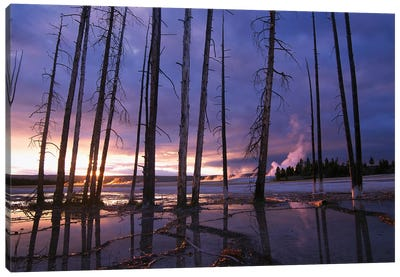Dead Trees In Lower Geyser Basin At Sunset, Yellowstone National Park, Wyoming Canvas Art Print
