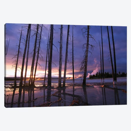 Dead Trees In Lower Geyser Basin At Sunset, Yellowstone National Park, Wyoming Canvas Print #TFI288} by Tim Fitzharris Canvas Artwork