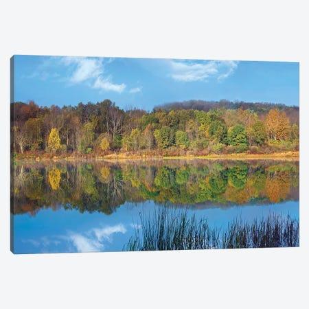 Deciduous Forest Along Lackawanna Lake, Ricketts Glen State Park, Pennsylvania Canvas Print #TFI289} by Tim Fitzharris Canvas Wall Art