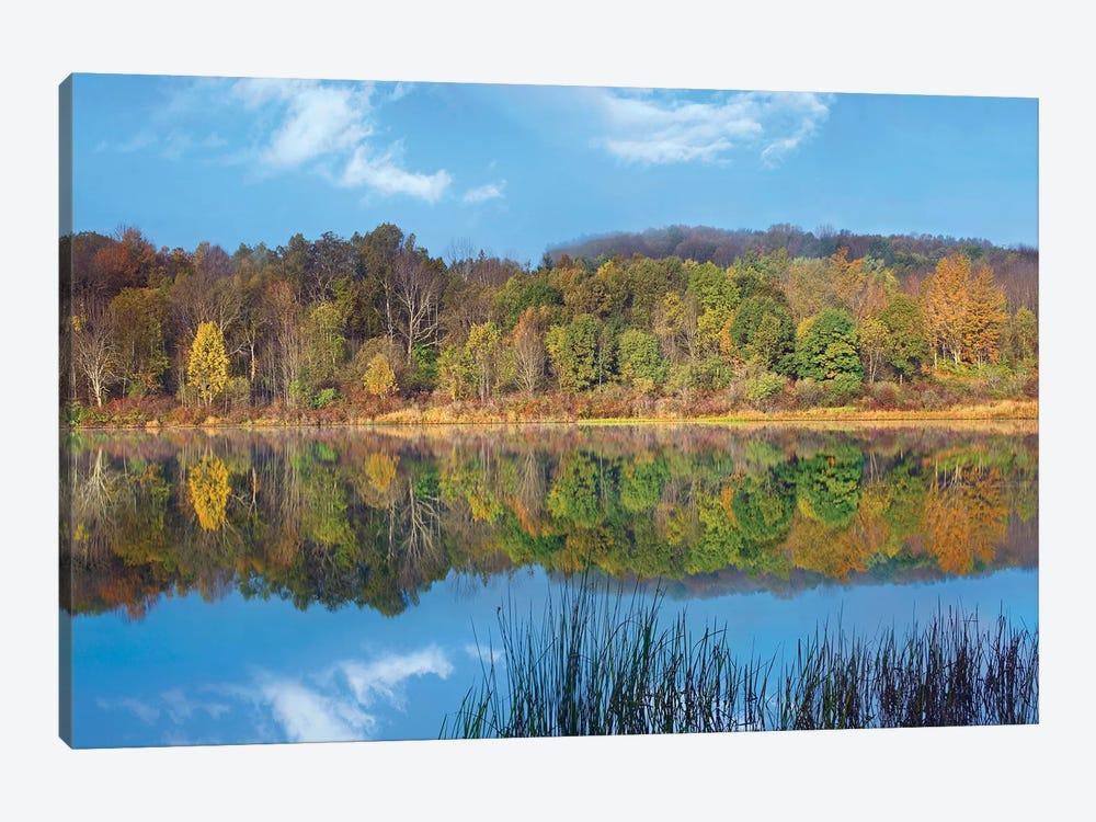 Deciduous Forest Along Lackawanna Lake, Ricketts Glen State Park, Pennsylvania by Tim Fitzharris 1-piece Canvas Art