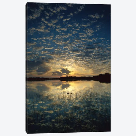 American Alligator In Nine-Mile Pond, Everglades National Park, Florida - Vertical Canvas Print #TFI28} by Tim Fitzharris Canvas Artwork