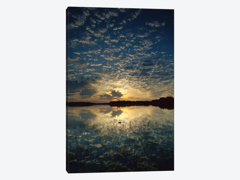 American Alligator In Nine-Mile Pond, Everglades National Park, Florida - Vertical by Tim Fitzharris 1-piece Canvas Art