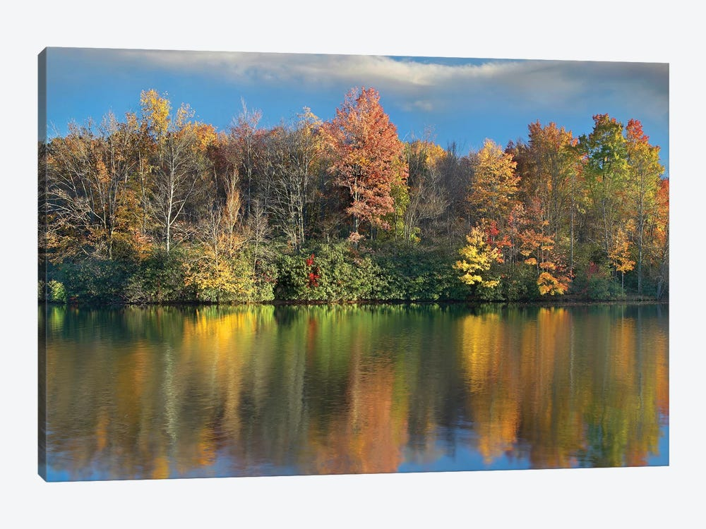 Deciduous Forest In Autumn Along Price Lake, Blue Ridge Parkway, North Carolina by Tim Fitzharris 1-piece Art Print