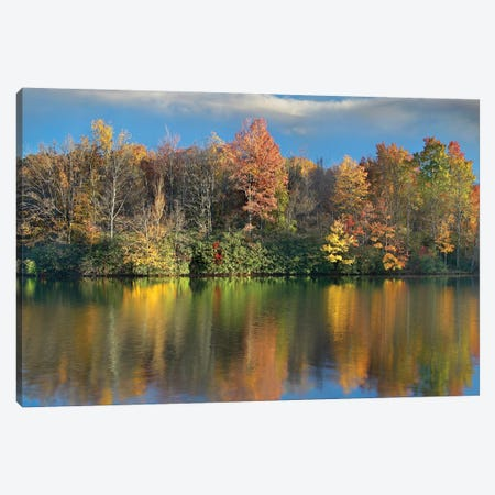 Deciduous Forest In Autumn Along Price Lake, Blue Ridge Parkway, North Carolina 3-Piece Canvas #TFI291} by Tim Fitzharris Canvas Print