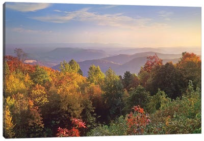 Deciduous Forest In Autumn, Blue Ridge Mountains From Doughton Park, North Carolina Canvas Art Print