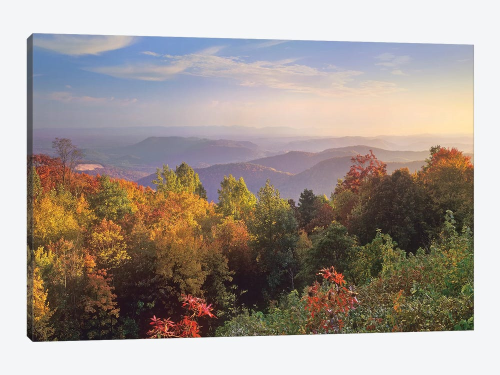 Deciduous Forest In Autumn, Blue Ridge Mountains From Doughton Park, North Carolina by Tim Fitzharris 1-piece Canvas Wall Art