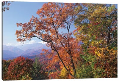 Deciduous Forest In Autumn, Blue Ridge Parkway, Great Smoky Mountains, North Carolina Canvas Art Print