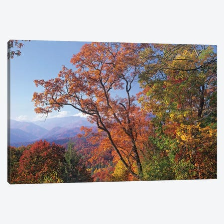 Deciduous Forest In Autumn, Blue Ridge Parkway, Great Smoky Mountains, North Carolina 3-Piece Canvas #TFI293} by Tim Fitzharris Canvas Art Print