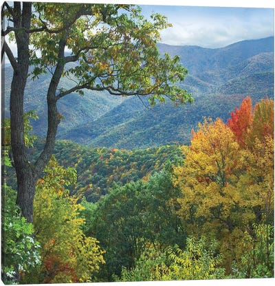 Deciduous Forest In Autumn, Blue Ridge Parkway, North Carolina Canvas Art Print