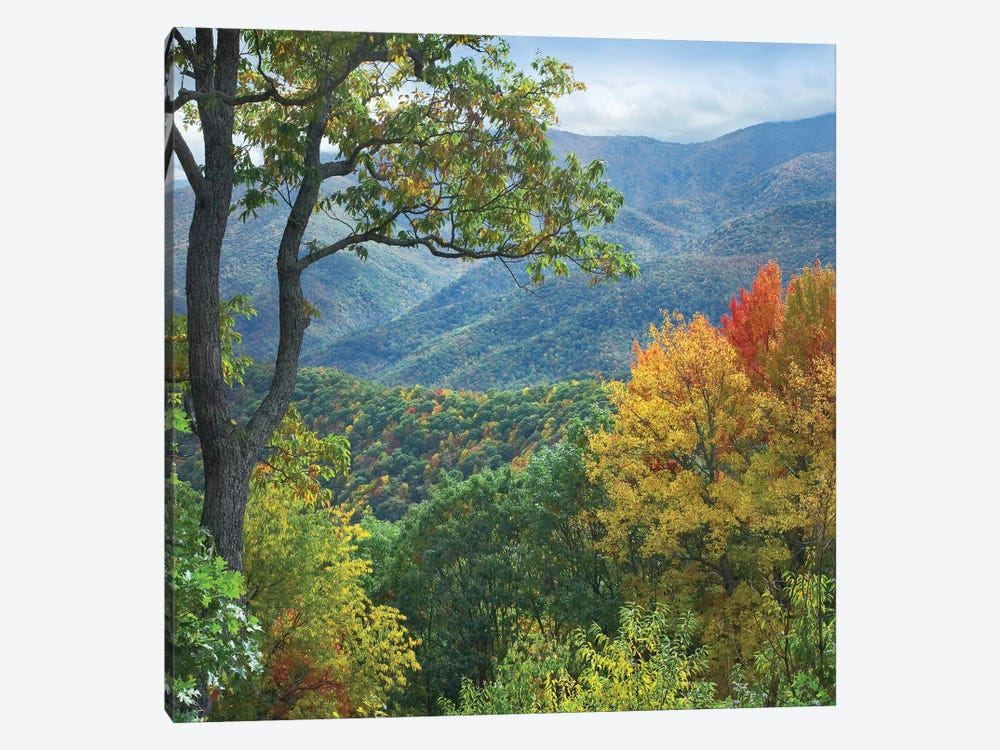 Deciduous Forest In Autumn, Blue Ridge Parkway, North Carolina 1-piece Canvas Wall Art