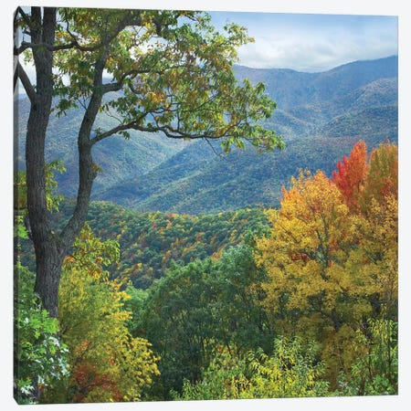 Deciduous Forest In Autumn, Blue Ridge Parkway, North Carolina 3-Piece Canvas #TFI294} by Tim Fitzharris Canvas Artwork