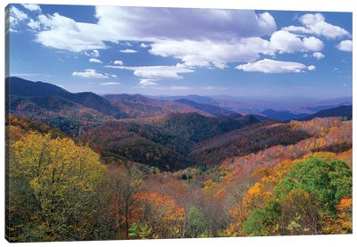 Deciduous Forest In The Autumn From Thunderstruck Ridge Overlook, Blue Ridge Parkway, North Carolina Canvas Art Print