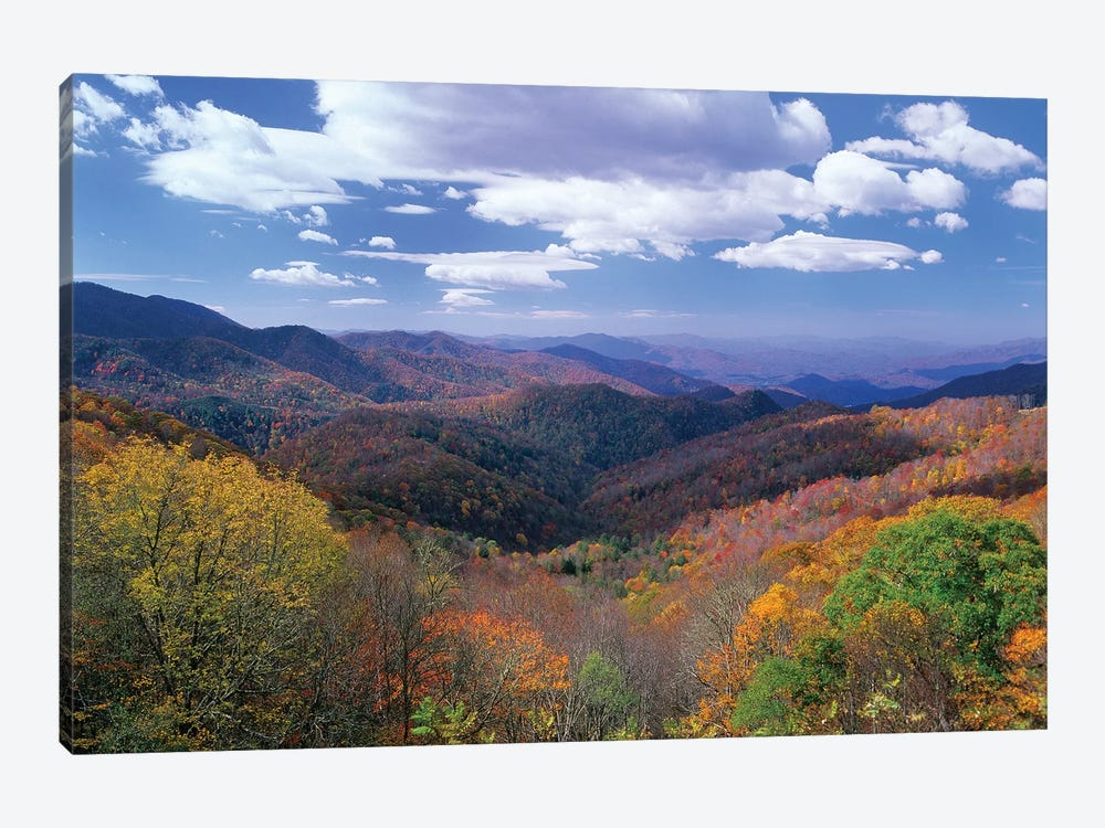 Deciduous Forest In The Autumn From Thunderstruck Ridge Overlook, Blue Ridge Parkway, North Carolina by Tim Fitzharris 1-piece Canvas Art Print