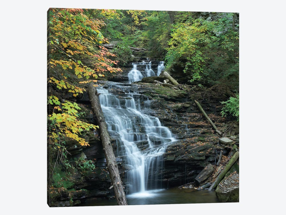 Delaware Falls, Ricketts Glen State Park, Pennsylvania by Tim Fitzharris 1-piece Canvas Wall Art