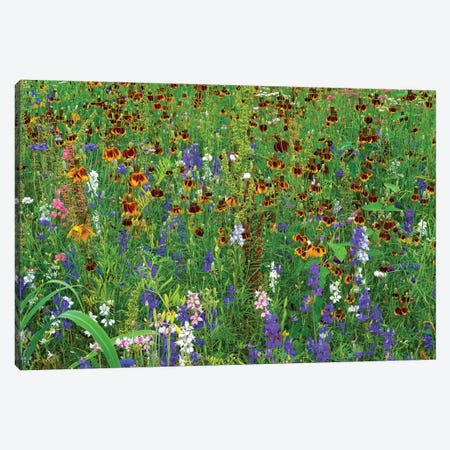 Delphinium And Mexican Hat Flowers In Meadow, North America Canvas Print #TFI302} by Tim Fitzharris Canvas Print
