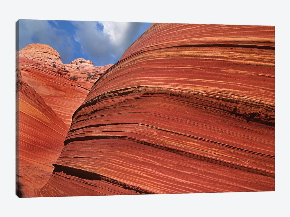 Detail Of The Wave, A Navajo Sandstone Formation In Paria Canyon-Vermilion Cliffs Wilderness, Arizona I by Tim Fitzharris 1-piece Canvas Art