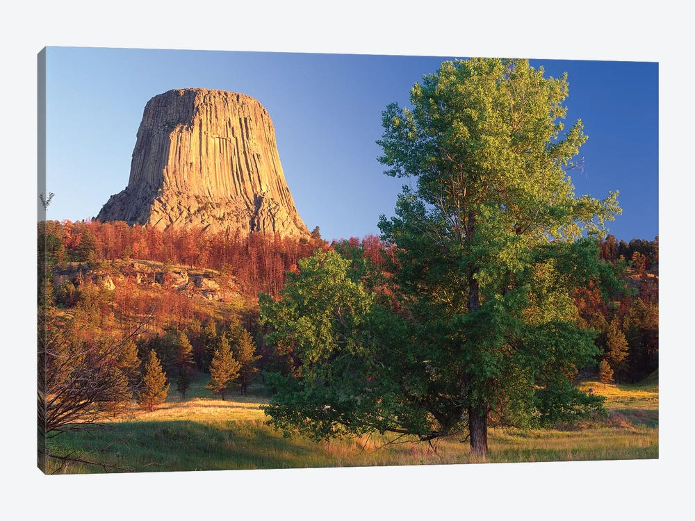 Devil's Tower National Monument Showing Famous Basalt Tower, Sacred Site For Native Americans, Wyoming I by Tim Fitzharris 1-piece Art Print