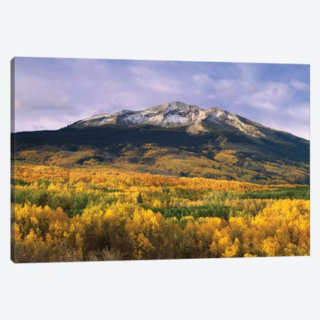 East Beckwith Mountain And Trees In Fall Color, Gunnison National Forest, Colorado Canvas Print #TFI324} by Tim Fitzharris Canvas Artwork