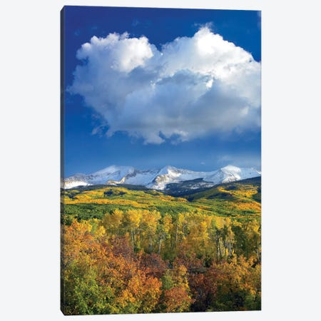East Beckwith Mountain Flanked By Fall Colored Aspen Forests Under Cumulus Clouds, Colorado I Canvas Print #TFI325} by Tim Fitzharris Canvas Artwork