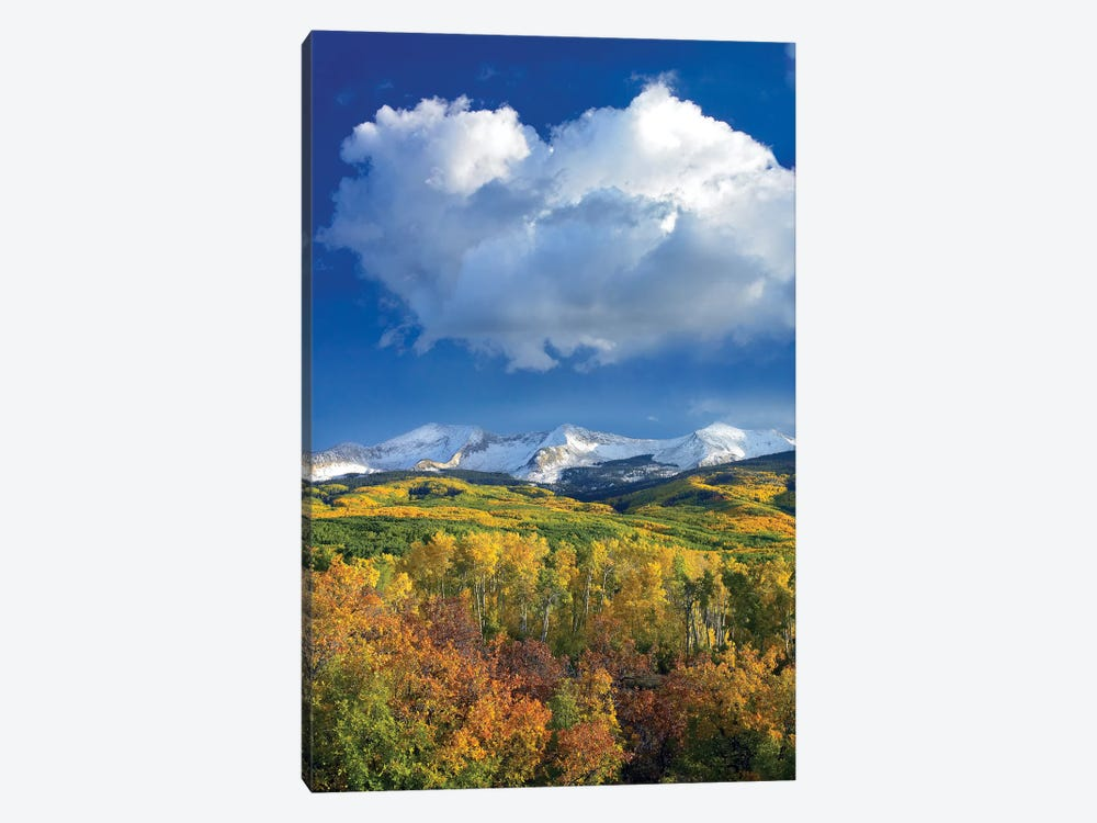 East Beckwith Mountain Flanked By Fall Colored Aspen Forests Under Cumulus Clouds, Colorado I by Tim Fitzharris 1-piece Canvas Art Print