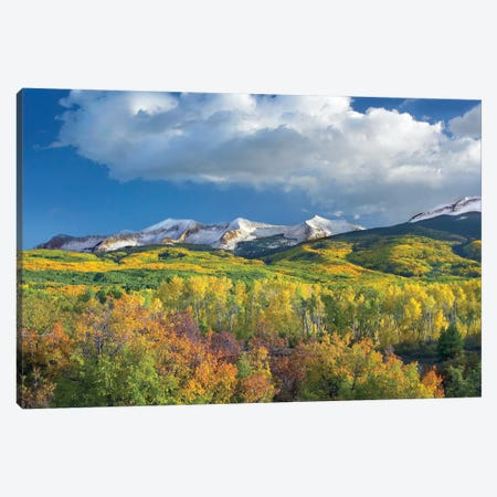 East Beckwith Mountain Flanked By Fall Colored Aspen Forests Under Cumulus Clouds, Colorado II Canvas Print #TFI326} by Tim Fitzharris Canvas Wall Art