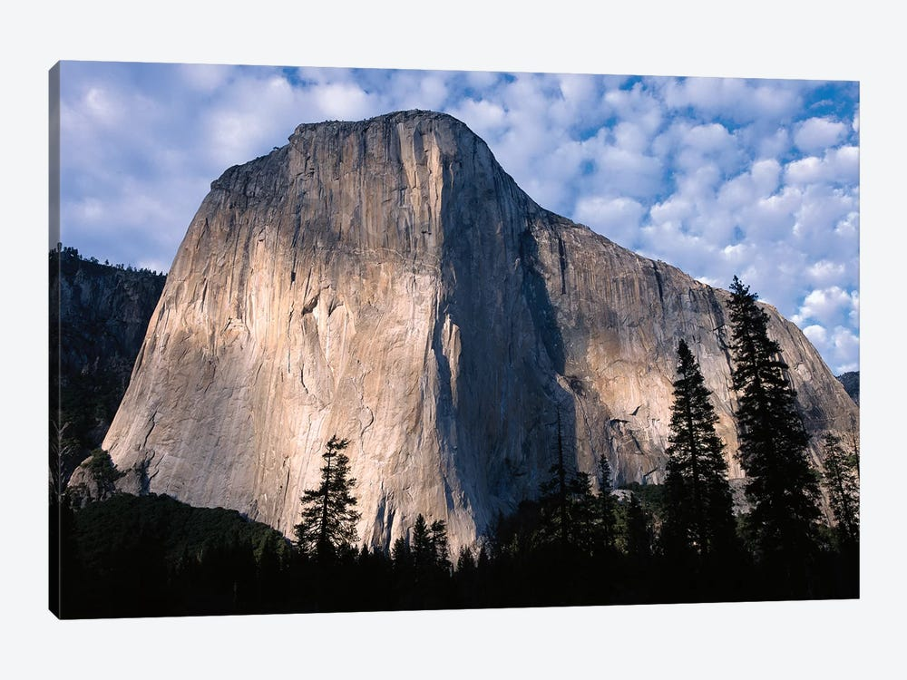 El Capitan Rising Over The Forest, Yosemite National Park, California by Tim Fitzharris 1-piece Canvas Art Print