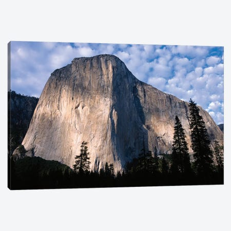 El Capitan Rising Over The Forest, Yosemite National Park, California Canvas Print #TFI334} by Tim Fitzharris Canvas Print