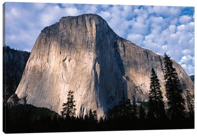 El Capitan Rising Over The Forest, Yosemite National Park, California Canvas Art Print