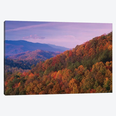 Fall Colored Forest, Appalachian Mountains, Great Smoky Mountains National Park, North Carolina Canvas Print #TFI353} by Tim Fitzharris Canvas Artwork