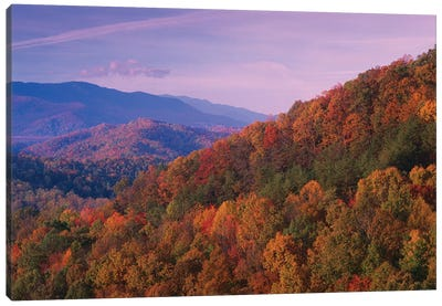 Fall Colored Forest, Appalachian Mountains, Great Smoky Mountains National Park, North Carolina Canvas Art Print