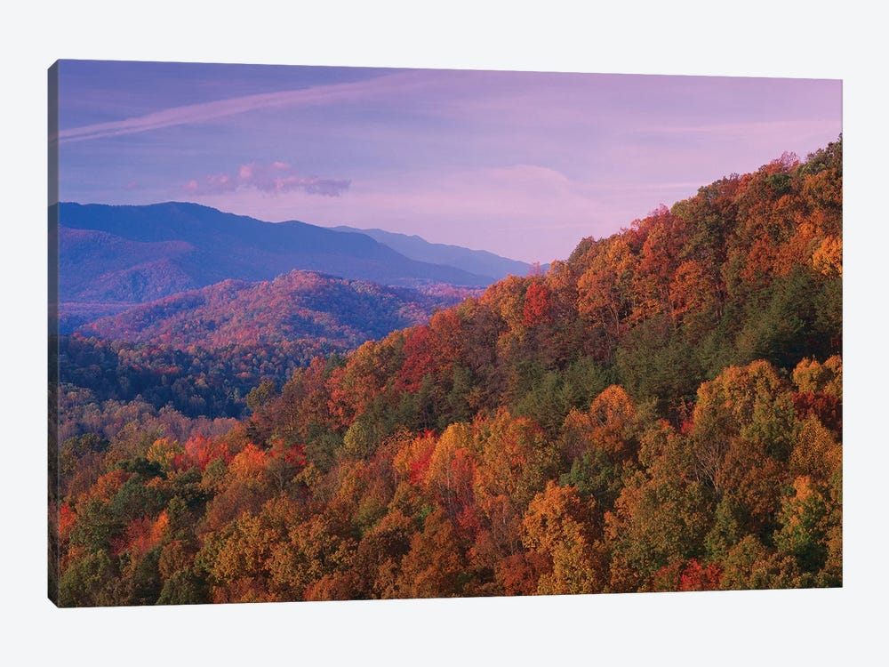 Fall Colored Forest, Appalachian Mountains, Great Smoky Mountains National Park, North Carolina by Tim Fitzharris 1-piece Canvas Art