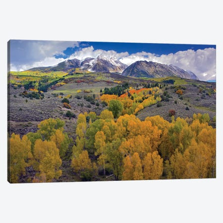 Fall Colors At Chair Mountain, Colorado Canvas Print #TFI354} by Tim Fitzharris Art Print