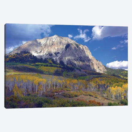 Fall Colors At Gunnison National Forest, Colorado Canvas Print #TFI355} by Tim Fitzharris Canvas Art Print