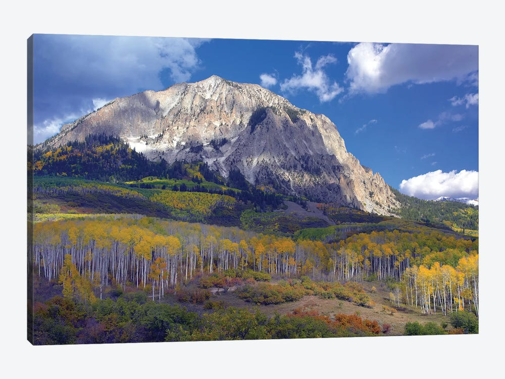 Fall Colors At Gunnison National Forest, Colorado by Tim Fitzharris 1-piece Canvas Wall Art