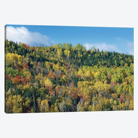 Fall Colors, Chic-Chocs, Quebec, Canada Canvas Print #TFI356} by Tim Fitzharris Canvas Art Print