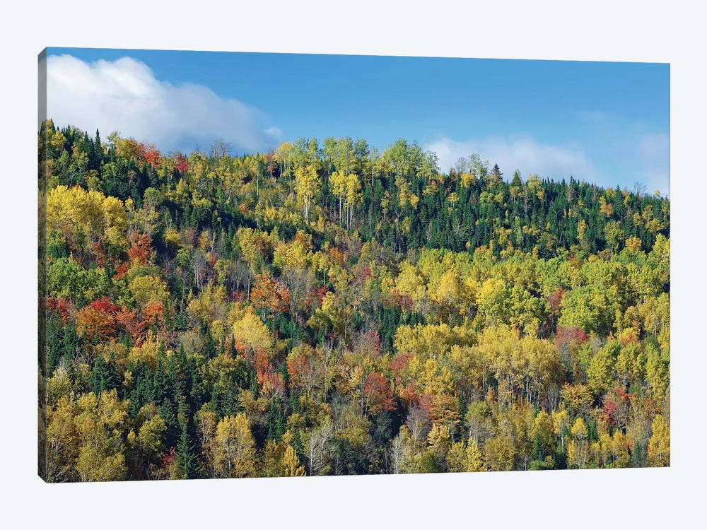 Fall Colors, Chic-Chocs, Quebec, Canada by Tim Fitzharris 1-piece Art Print