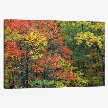 Fall Foliage At Fishers Gap, Shenandoah National Park, Virginia Canvas Print #TFI357} by Tim Fitzharris Canvas Print