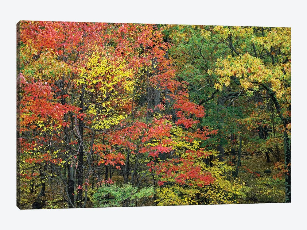 Fall Foliage At Fishers Gap, Shenandoah National Park, Virginia by Tim Fitzharris 1-piece Canvas Artwork