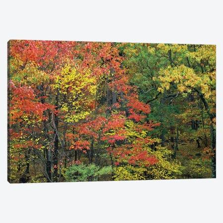 Fall Foliage At Fishers Gap, Shenandoah National Park, Virginia Canvas Print #TFI357} by Tim Fitzharris Canvas Print