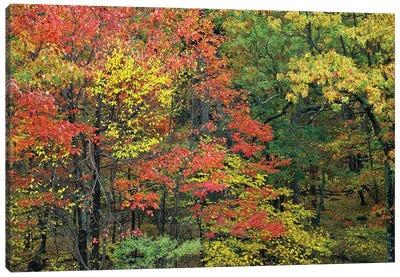 Fall Foliage At Fishers Gap, Shenandoah National Park, Virginia Canvas Art Print