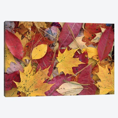Fall-Colored Maple, Sourwood And Cherry Leaves On Ground, Great Smoky Mountains National Park, Tennessee 3-Piece Canvas #TFI358} by Tim Fitzharris Canvas Wall Art