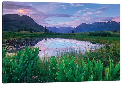 False Hellebore Surrounded Pond With Grand Turk And Kendall Mountains In Background, Molas Pass, Colorado Canvas Art Print