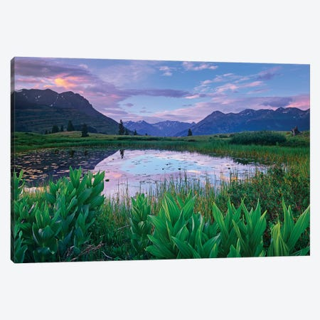 False Hellebore Surrounded Pond With Grand Turk And Kendall Mountains In Background, Molas Pass, Colorado Canvas Print #TFI363} by Tim Fitzharris Art Print