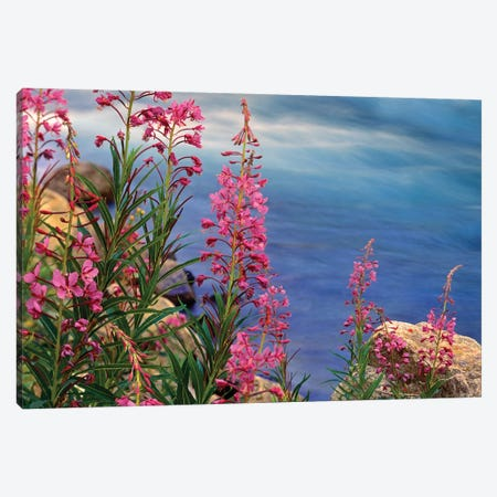 Fireweed Against Flowing Stream, North America Canvas Print #TFI367} by Tim Fitzharris Canvas Art