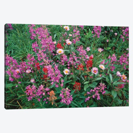 Fireweed Asters And Paintbrush, North America Canvas Print #TFI368} by Tim Fitzharris Canvas Print