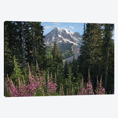 Fireweed Flowering And Mount Rainier, Mount Rainier National Park, Washington Canvas Print #TFI369} by Tim Fitzharris Canvas Art Print